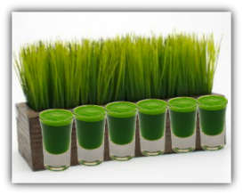 Growing wheatgrass pic