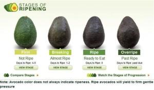 Avocados ripening