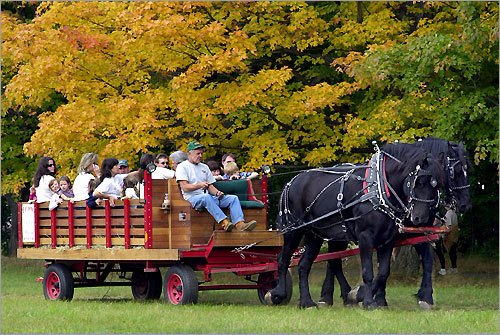 Enjoy a Hayride